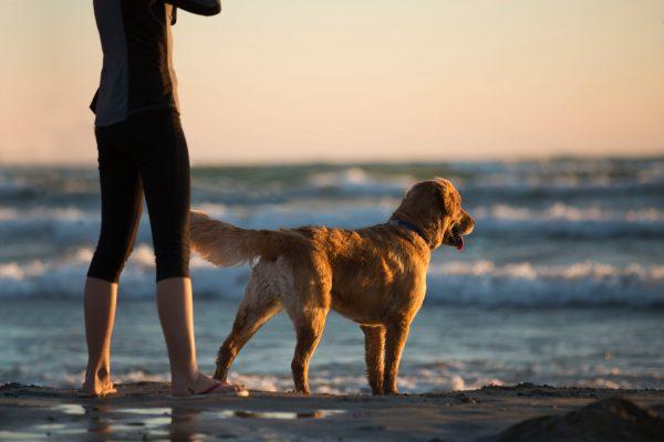 Urlaub mit den Haustieren